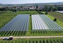 В Германии впервые яблоневый сад дополнили солнечными батареями