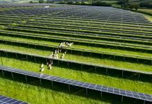 Ниже некуда: новый рекорд цен на солнечную энергию поставлен в Дании