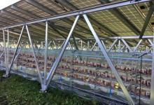 В Японии солнечные электростанции совместят с грибными фермами