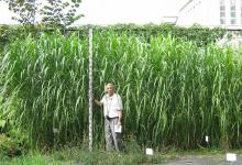 20 заводов по производству биотоплива из мискантуса построят в Украине американские инвесторы