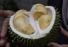 Аэрогель из самого вонючего фрукта стал основой для суперконденсаторов с высокой плотностью энергии и стабильностью