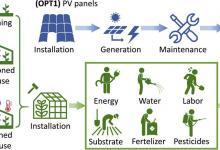 Исследование: солнечные батареи или зеленые насаждения — что лучше размещать на крыше?