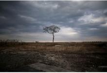 Немцы будут вырабатывать энергию из радиоактивных лесов Фукусимы