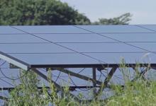 Солнечные электростанции улучшают биоразнообразие земель