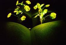 Светящиеся растения смогут заменить лампы в экологичных домах (видео)