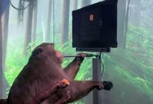 Мозговой чип Neuralink позволил обезьяне мысленно управлять компьютером