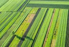 Дефицит воды в сельском хозяйстве: прокормить можно будет еще максимум 800 млн человек