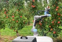 Робот для сбора урожая срывает до 9 яблок за минуту