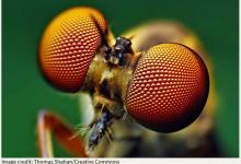 Новые солнечные элементы из перовскита созданы учеными, вдохновленными глазом мухи