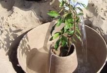 Биоразлагаемый «кокон» позволит высаживать деревья в пустыне