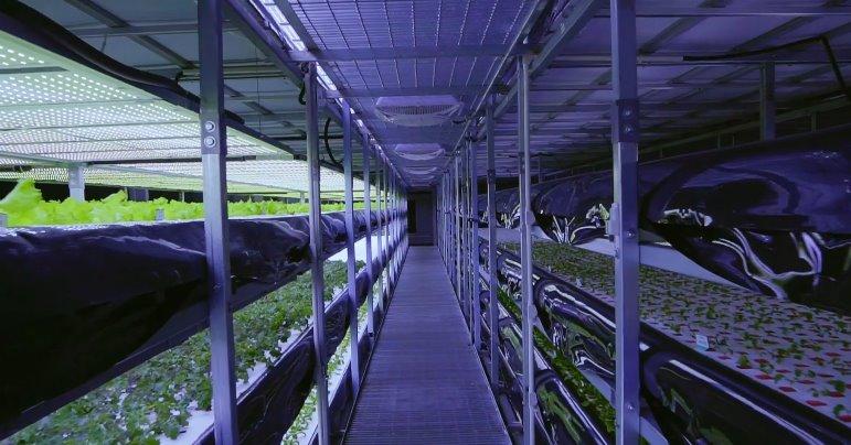 Гидропонная ферма с роботами