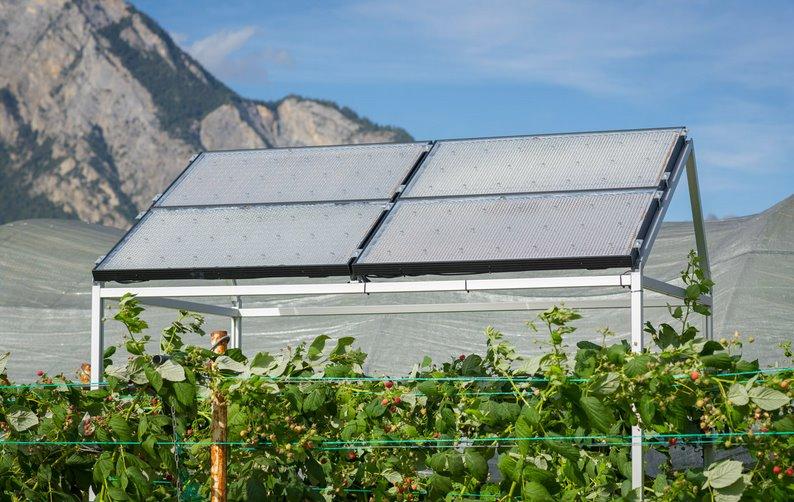 Прозрачная солнечная крыша для агровольтаики генерирует энергию с КПД 30