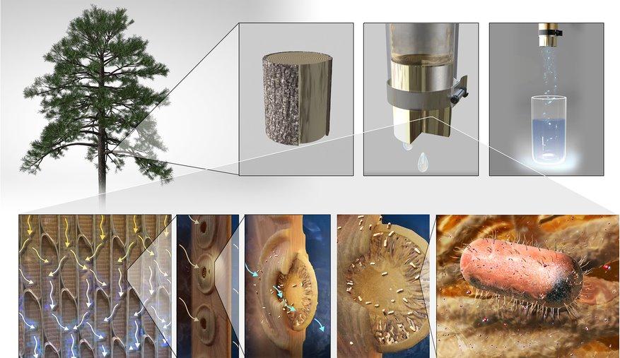Деревянный фильтр для воды