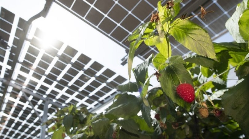 Прозрачные солнечные панели на теплице
