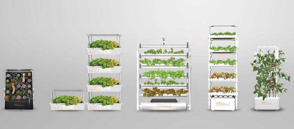 Овощи для выращивания дома 45