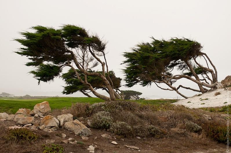 Дерево-ветрогенератор