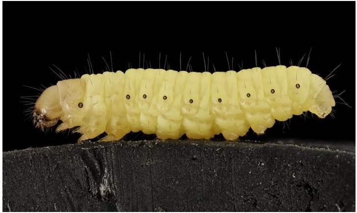 червь есть пластик