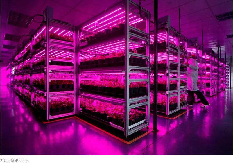 Вертикальная ферма Panasonic приносит 80 тонн урожая ежегодно
