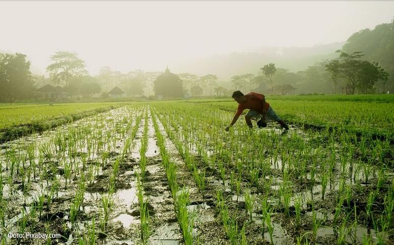 Люди исчерпали годовой запас ресурсов Земли— Экологи