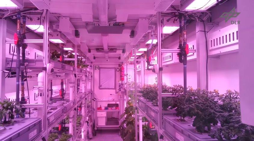 Выращивание растений в лютые морозы