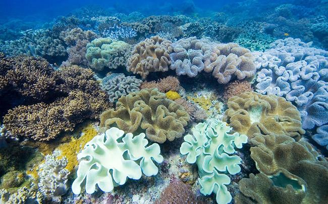 Искусственный коралл чистит океан от токсичных элементов