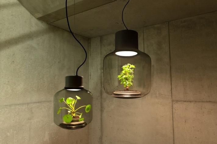 Гидропоника  Eco-lampa-iz-rasteniy
